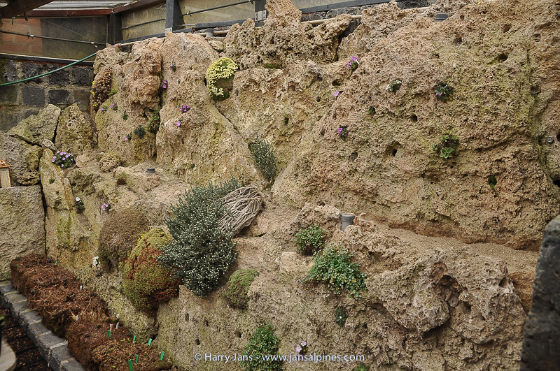 tufa wall alpines house