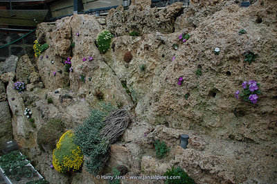 tufa wall in alpine house
