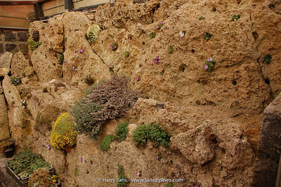 tufa wall alpine house
