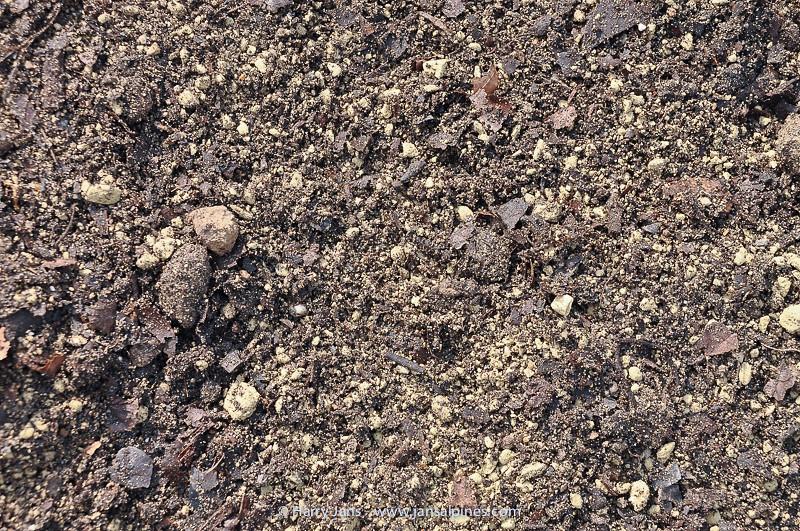 soil mix for Cypripedium