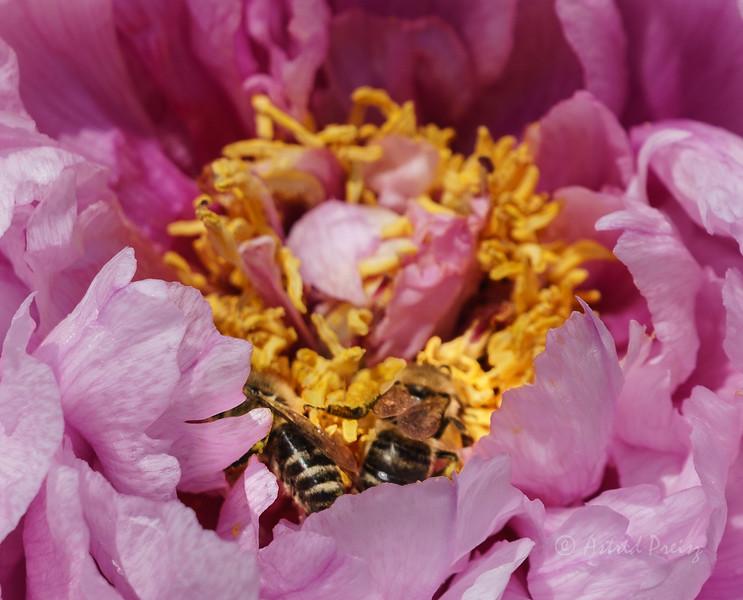 Bee heaven!