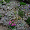 planted tufa rock, incl. many seedlings