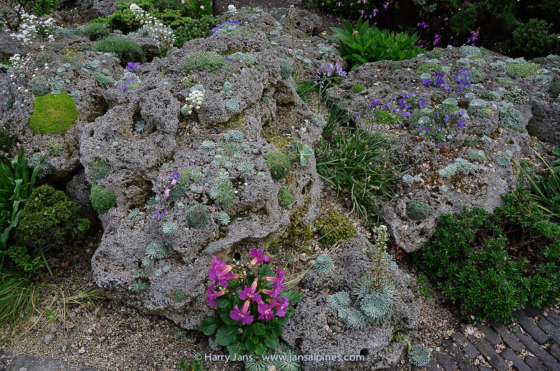 planted tufa rock, incl. many seedlings