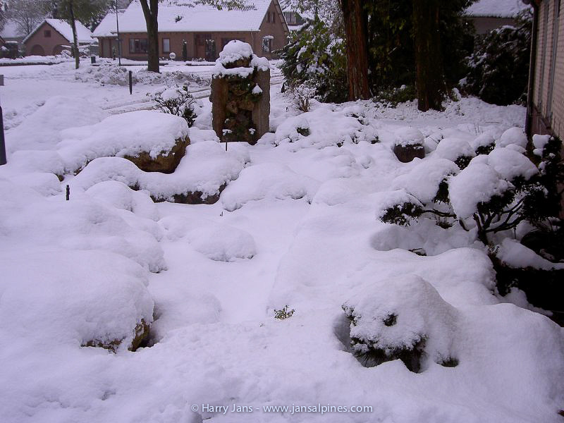 this time we had a snow record (35-40cm)