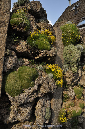 25-year old cushions on tufa wall