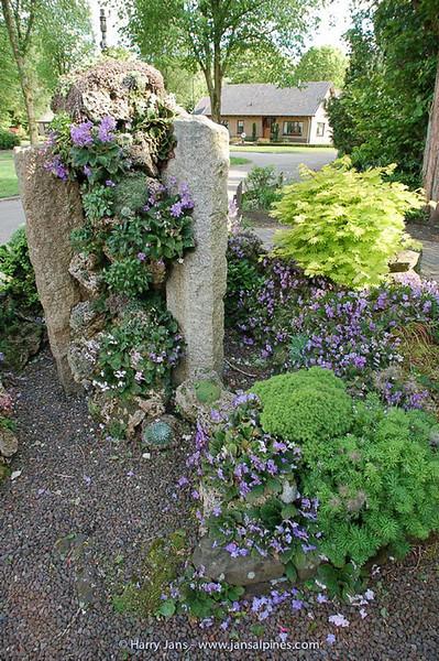 tufa column and Ramonda myconi