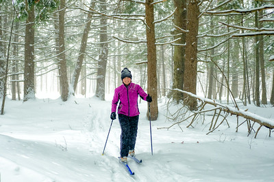 Senior lady enjoying a ski through a hemlock grove on a snowy day