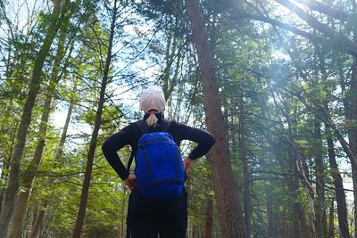 Senior lady enjoying the sunlight filtering through the crown of a mature hemlock grove
