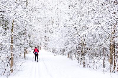 Senior man cross country skiing through a winter wonderland