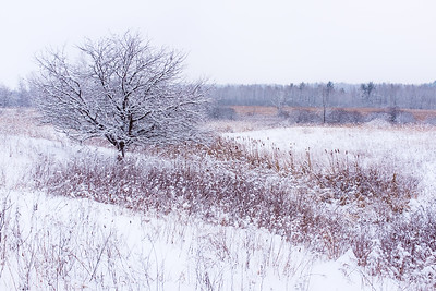 Classic early winter bog scenery just off the ski trail