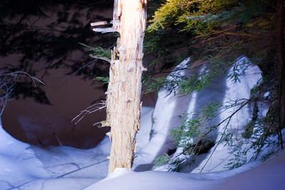Near a beaver dam.