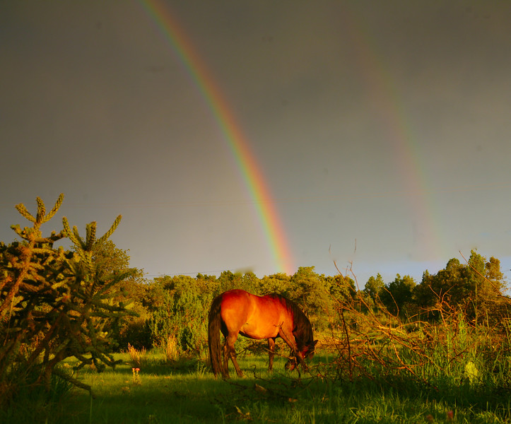Mustang and double rainbow<br /> Rachael Waller Photography