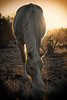Mamadou at sunrise<br /> Rachael Waller Photography