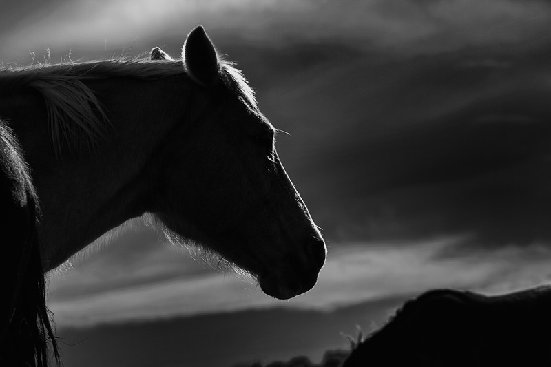 Guardian of the Mares<br /> Rachael Waller Photography