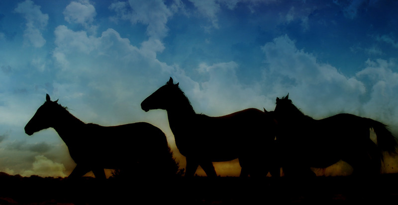 Fillies in the morning