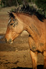 War Pony by his little girl<br /> Rachael Waller Photography