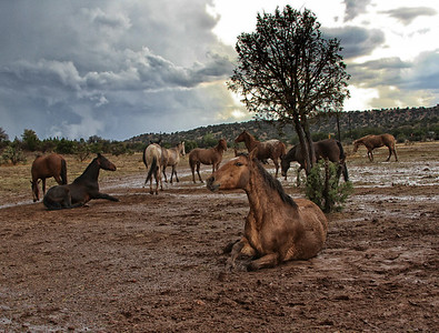 After the rain in the high desert. Rachael Waller Photography