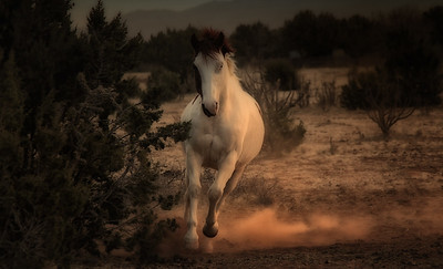 The Firelight South Herd-