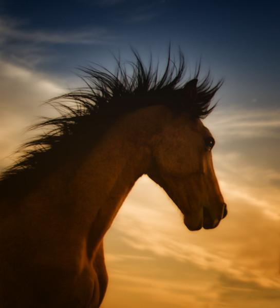 Sweet Grass at daybreak<br /> ©Rachael Waller Photography