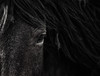 Three strikes Mustang<br /> Rachael Waller Photography