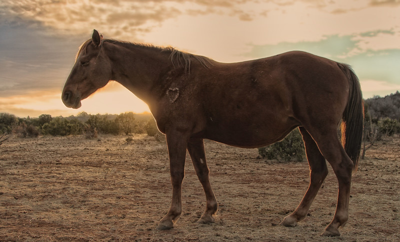 Sunrise with Cante<br /> Big Bend 8<br /> Rachael Waller Photography