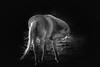 Amazing Grace black & white<br /> Rachael Waller Photography