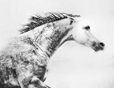 Ghost Horse From the series Sticks & Stones
