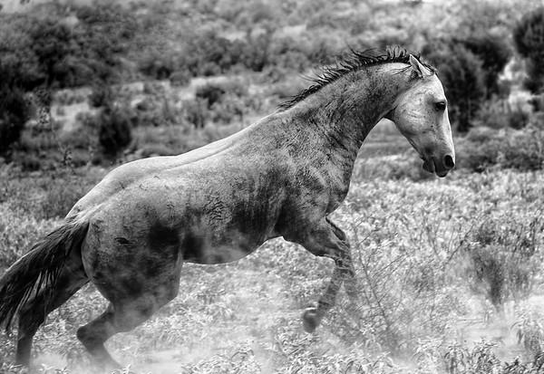 Defending his herd Rachael Waller Photography