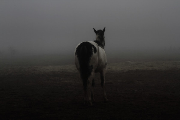 Noqah waits for the herd in the fog.  Rachael Waller Photography