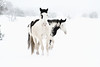 Jingo & Noqah in the snow. Living free.<br /> Rachael Waller Photography