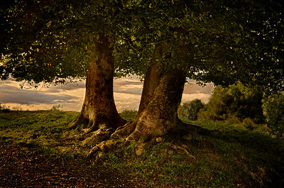 At Danebury Hill Fort in the setting sun.