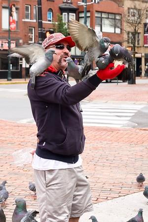 Pigeon Man,  Portland, Maine