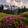 Mount Rainier above Pink Heather