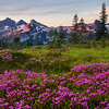 Tatoosh Range and Pink Heather
