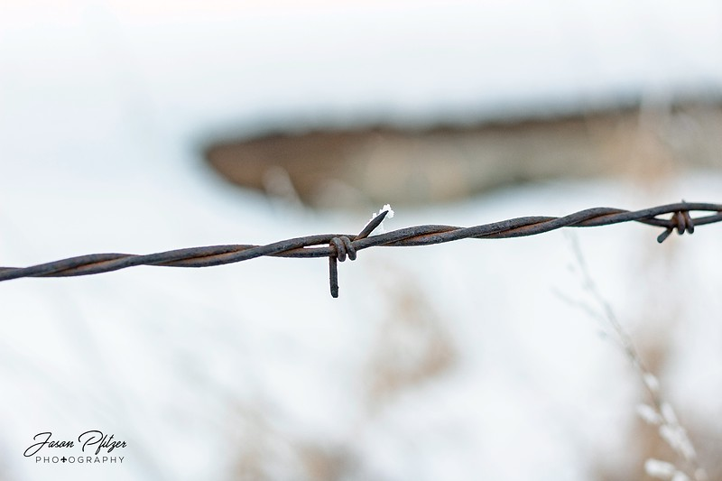 Close-up of a section of barbed wire. A pinch of frost was attached to the barb. Enjoy and hold hands.