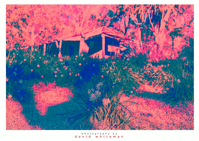 Bush Hut in Psychadelia