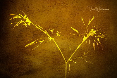 Dill Abstract