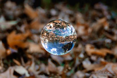 Autumn under glass