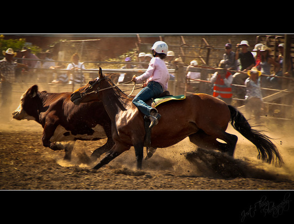 Campdraft... Highly Commended 2011 Penrith Show
