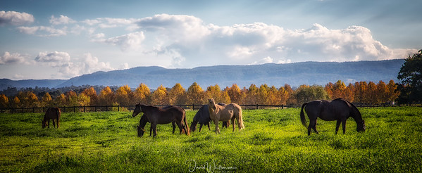 The Mares in Autumn