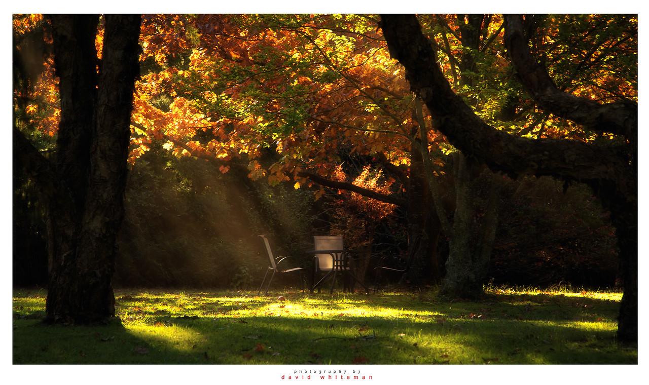 Afternoon Tea in Autumn