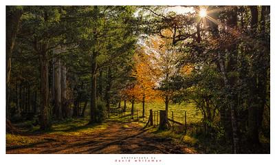 The Meadows Way
