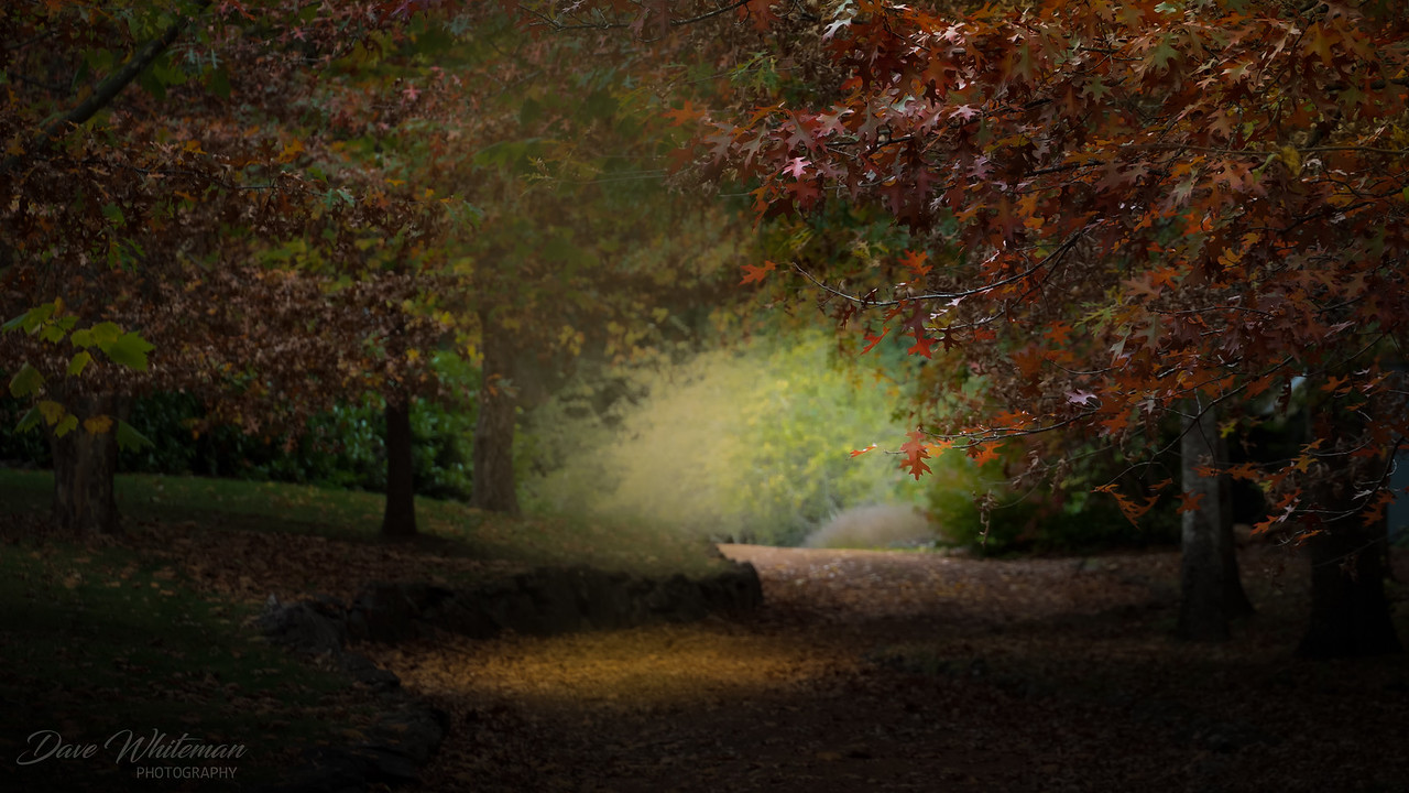 Autumn in Mount Wilson
