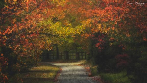 Sam's Way in Autumn