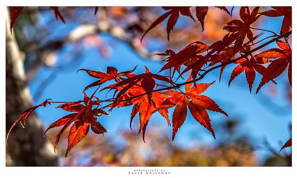 The Colour of Autumn