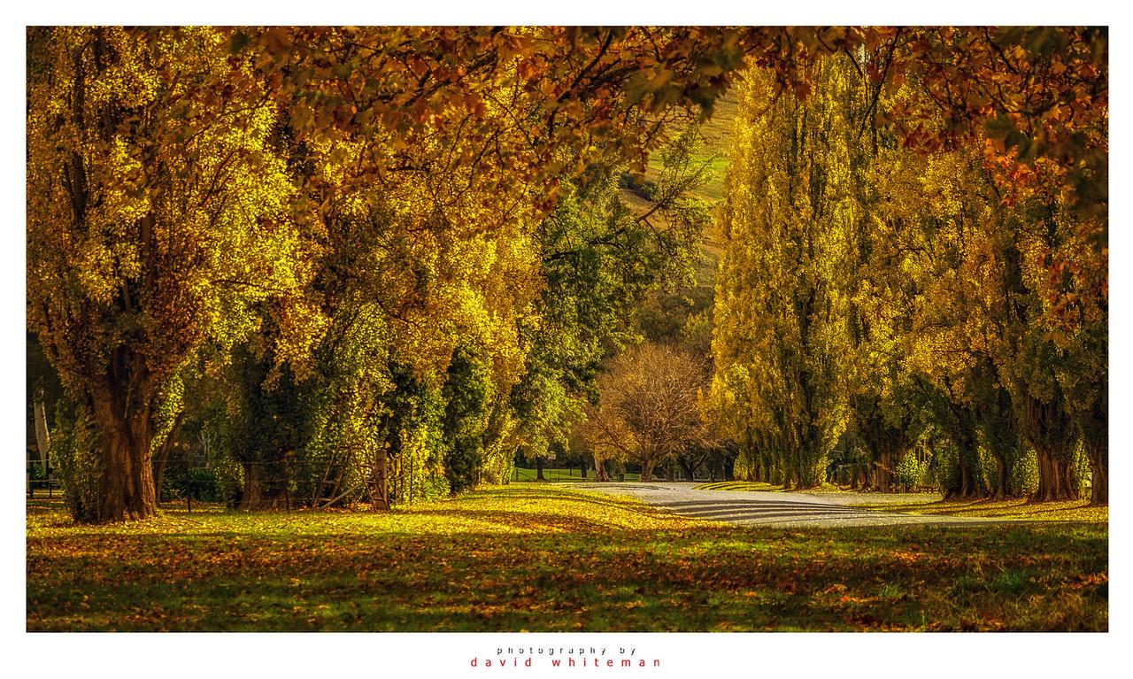 Autumn in Gundagai