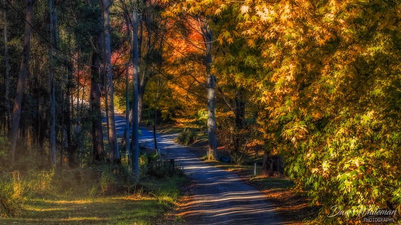 Autumn along Sams Way Mountain Lagoon