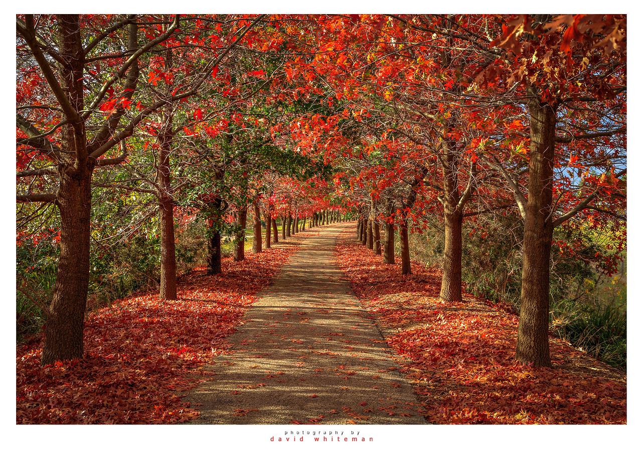 Beechworth Walk
