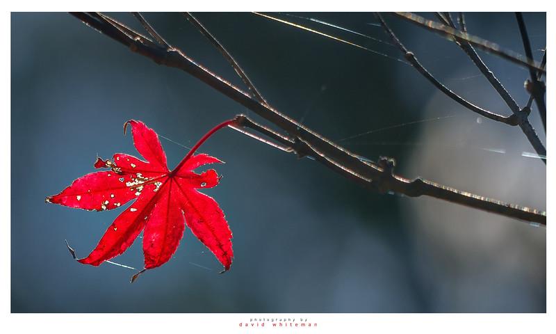 Autumn Webs