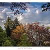 Autumn in Mt Wilson